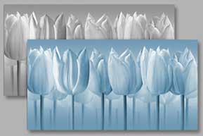 TVtulips - choose your colour
