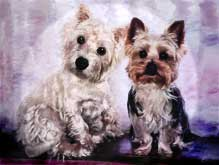 yorkie and westie canvas painting